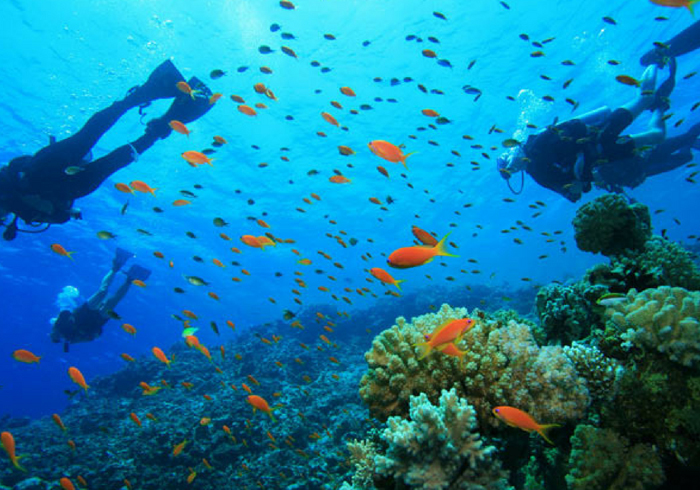 pulau tenggol diving package